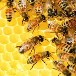 Honing en Bijenproducten